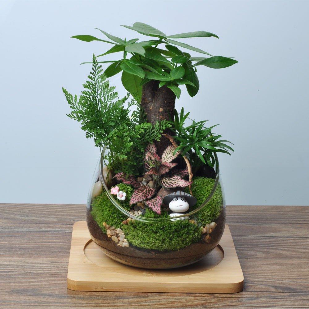 依雯然 室内植物盆栽 diy情人节礼物 苔藓微景观生态瓶 (简装)