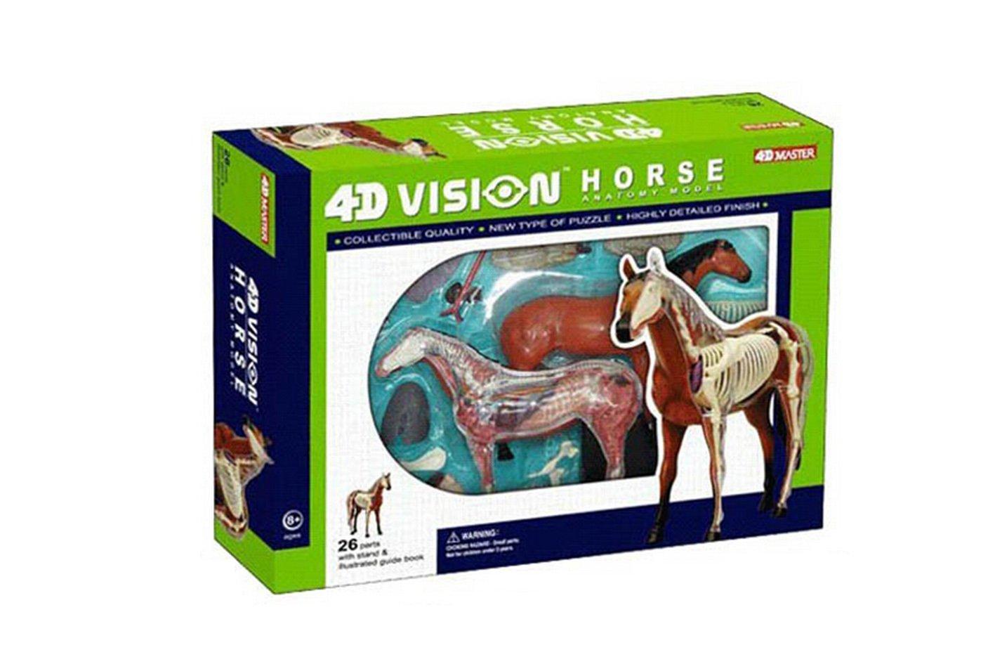 4d master 动物解剖拼装模型 马模型26101