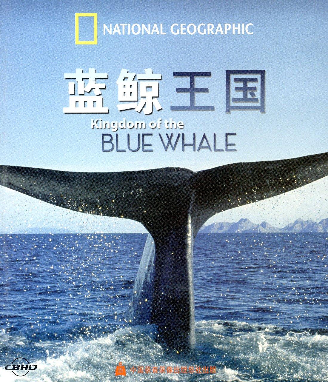 蓝鲸的简笔画带颜色