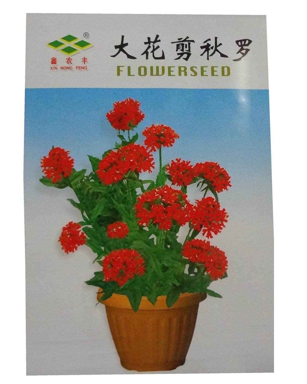 锦萱 大花剪秋罗种子 家庭种子实用装 阳台室内盆栽花卉种子