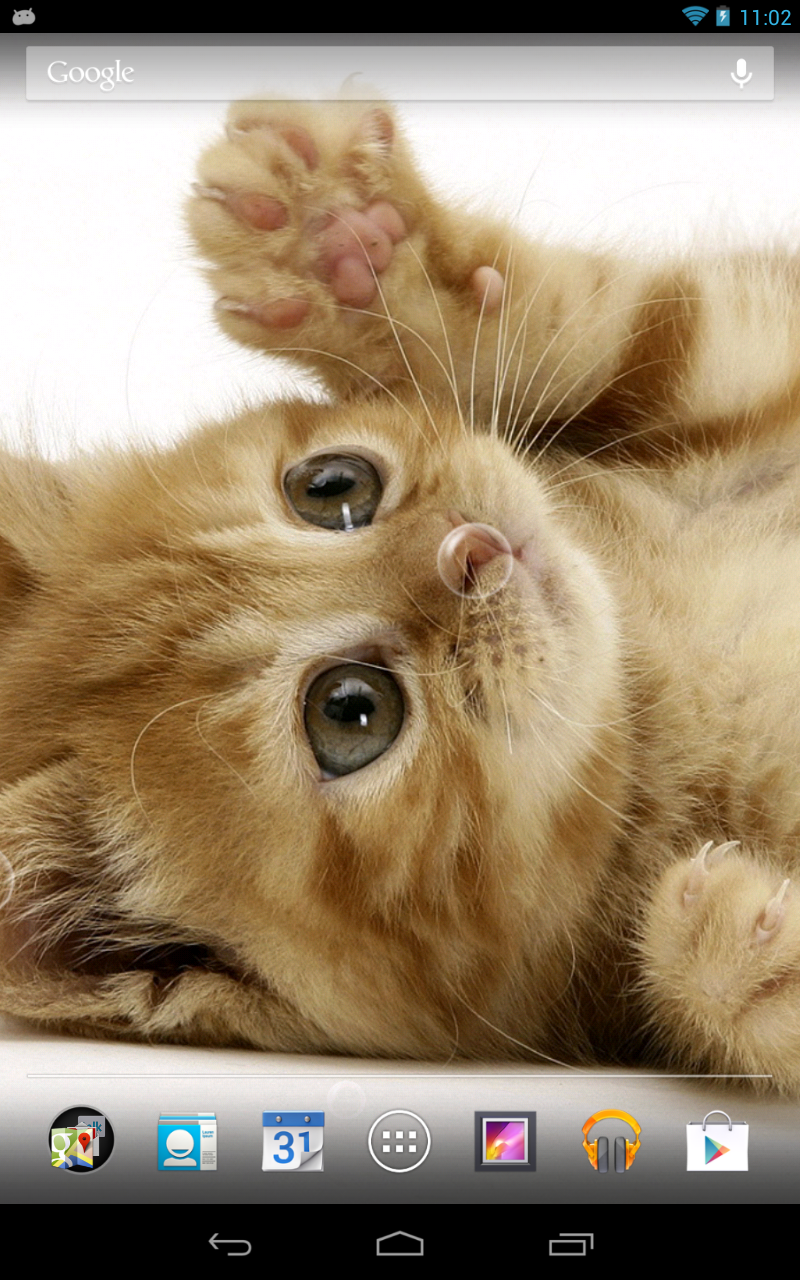 萌萌猫咪动态壁纸