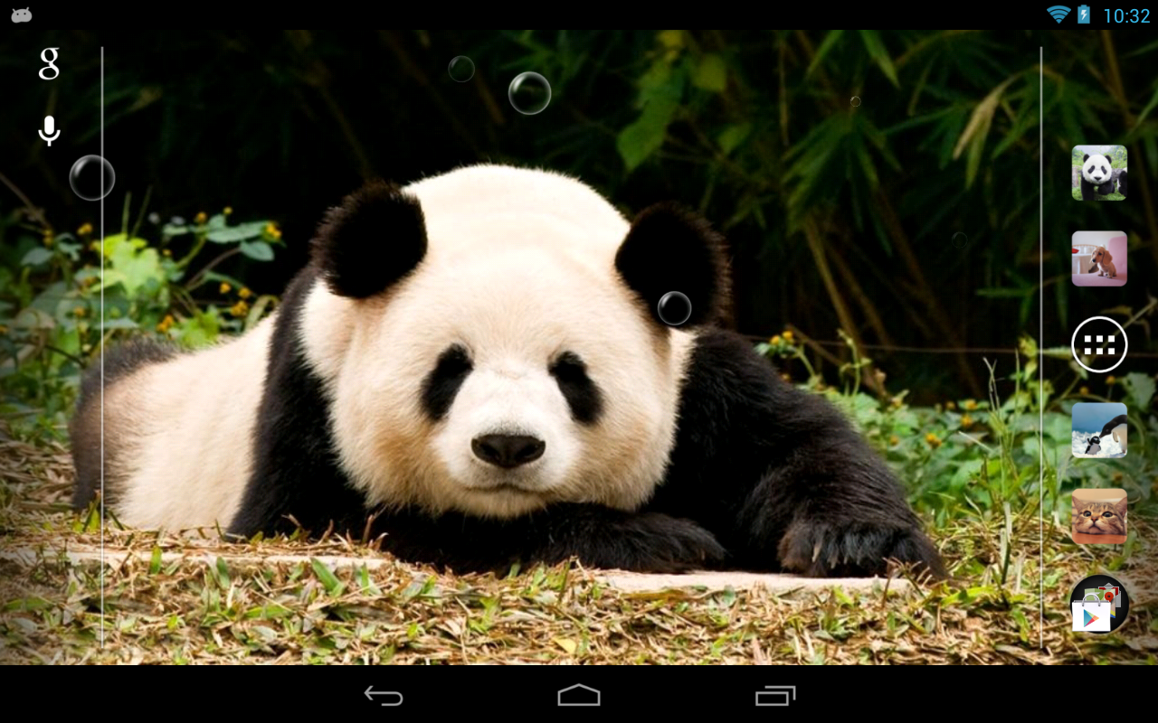 萌萌熊猫动态壁纸
